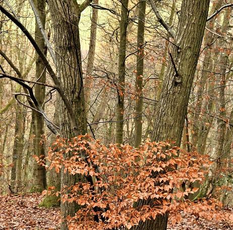 Horderley Wood