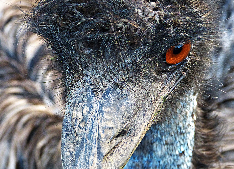 Eye of the Emu!