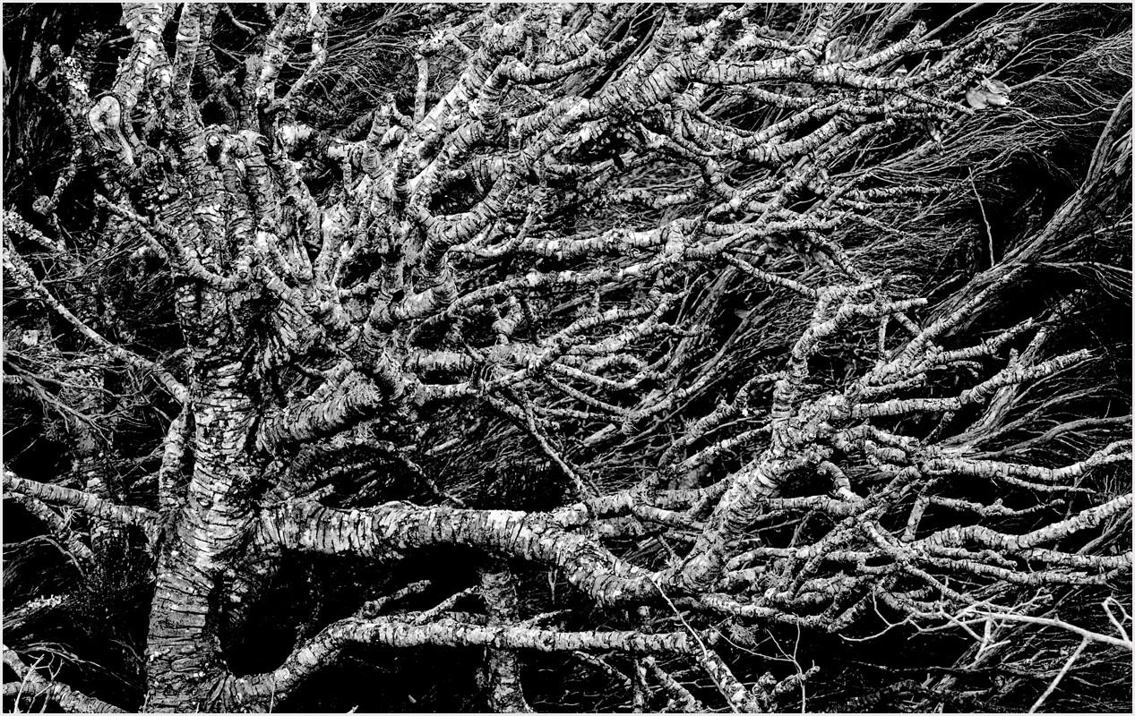 07 Weathered Wood.jpg