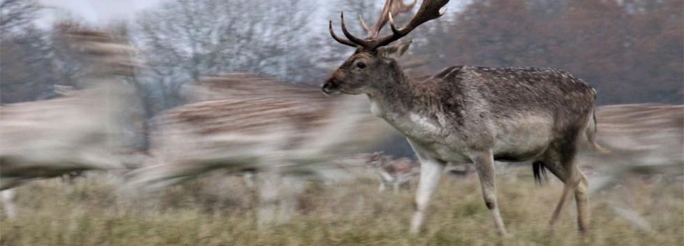 21 It`s all a blur, my deer!.JPG