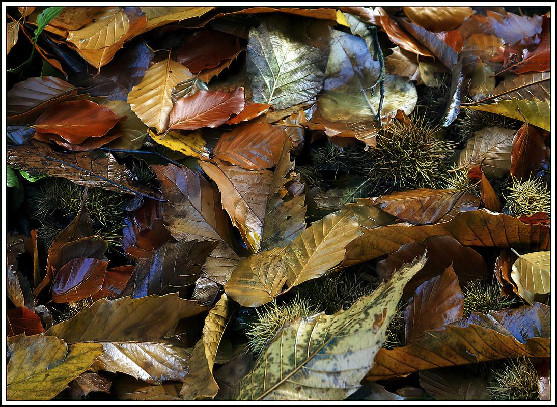 Autumn Detritus