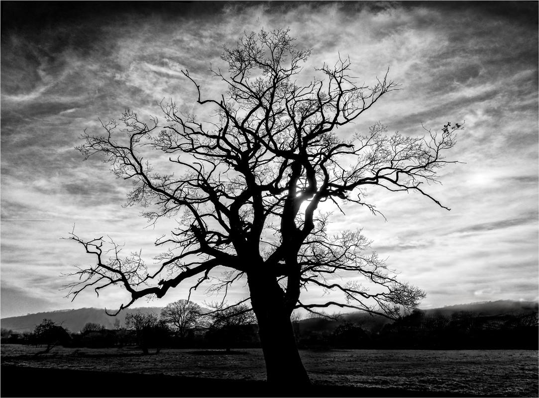 23 Tree in Winter Sun.jpg
