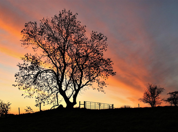 20 Sunset.jpg