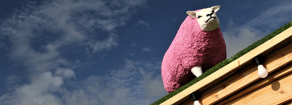 04 pink sheep