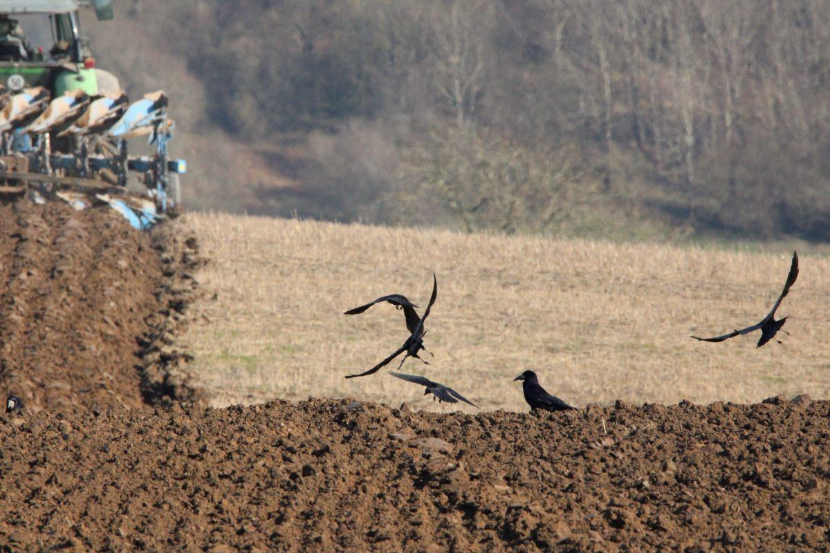 Scare Crow: Lynn Upton-Roddy