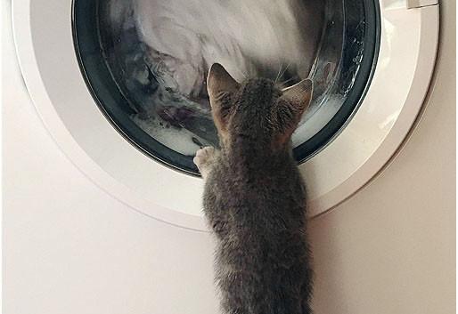15 Washing Day.jpg