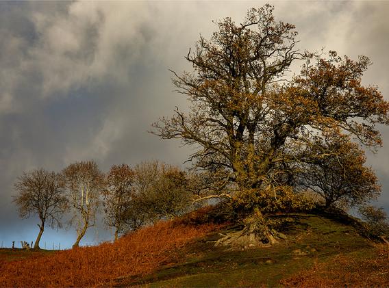 11 Little Stretton Trees.jpg