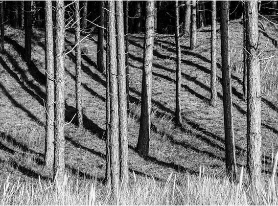 06 Shadows of the forest.jpg