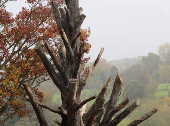 22 Tree at Bodenham Arboretum