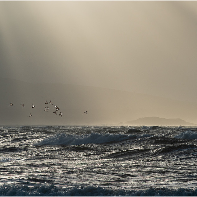 Joint 2nd: Oystercatchers over winter sea.jpg