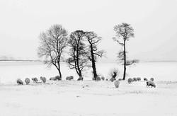 Winter Feed