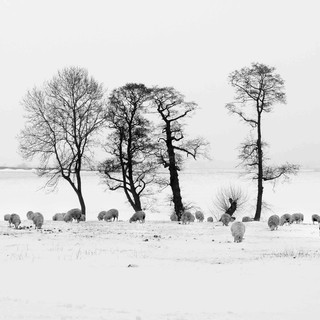 Print 1st Place: Winter Feed