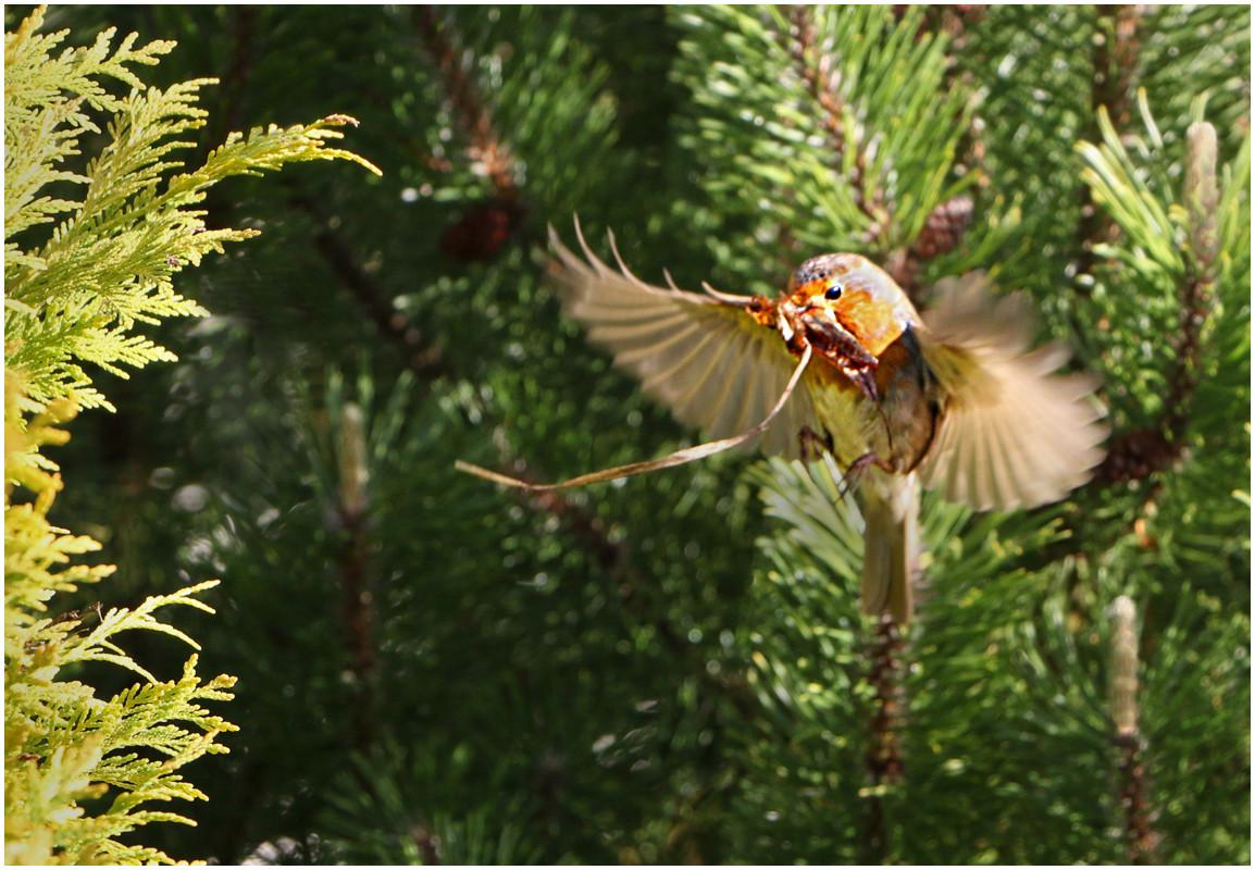 18 Nesting Time.jpg