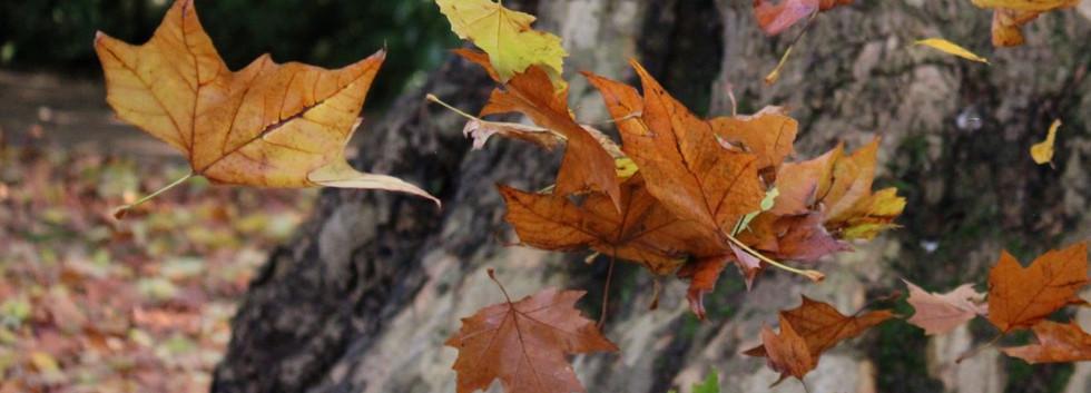 01 floating autumn leaves.JPG