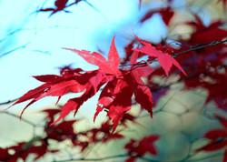 autumn colours - L