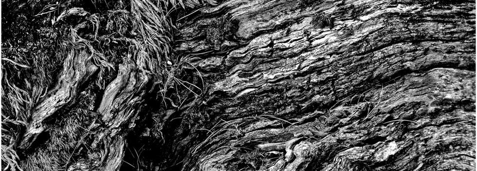 03 Weathered Wood