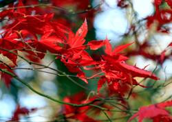 Autumn Colours - R