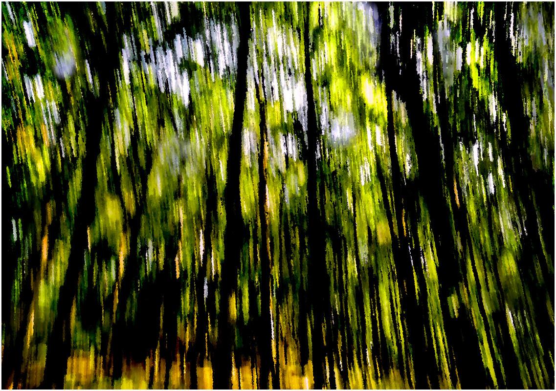 02 Woodland - An Impression