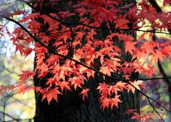Autumn colours - M