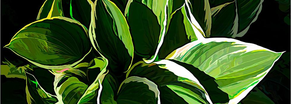 Greens Leaves