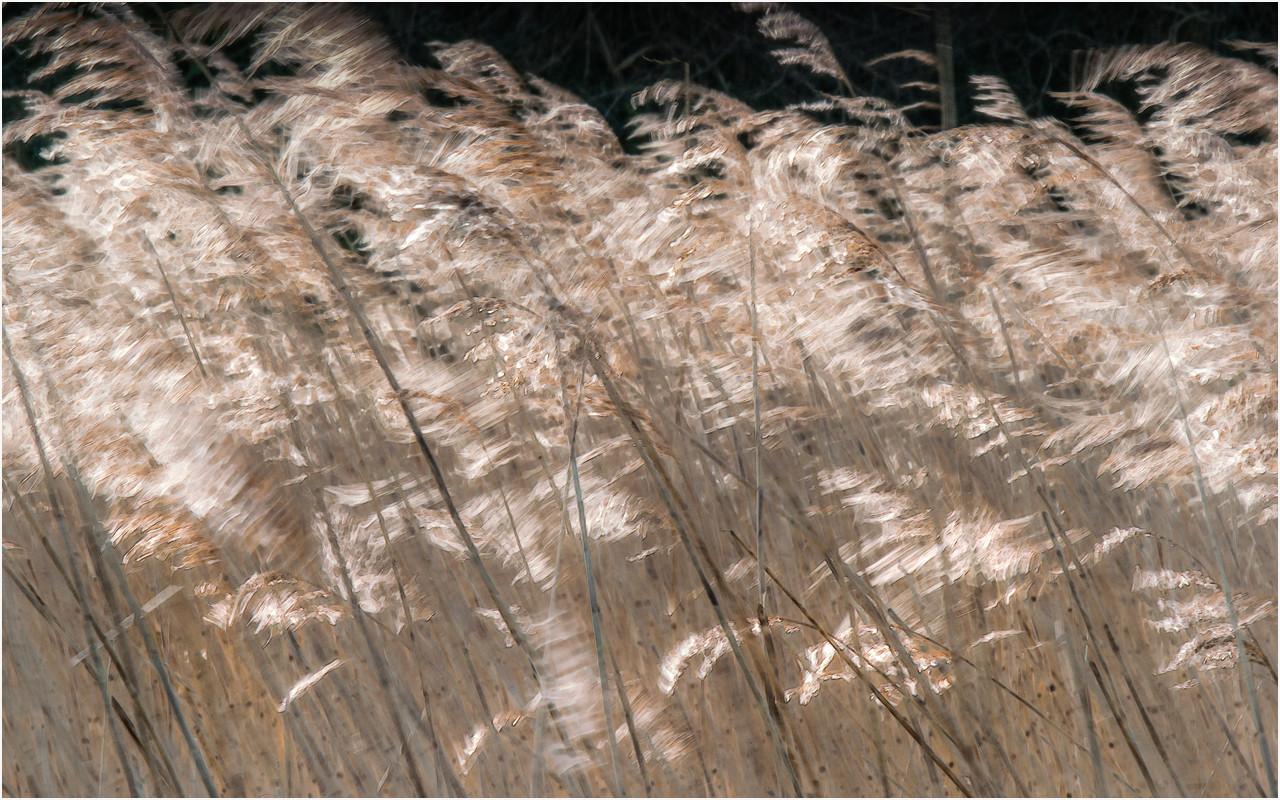 25 Wind in the reeds.jpg