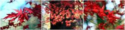 Panel Autumn Colours