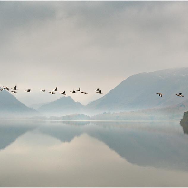 1st: Open - Winter flypast, Derwentwater.jpg
