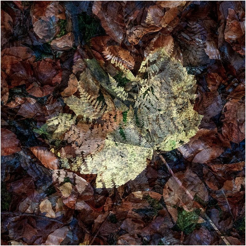 12 Memory of autumn.jpg
