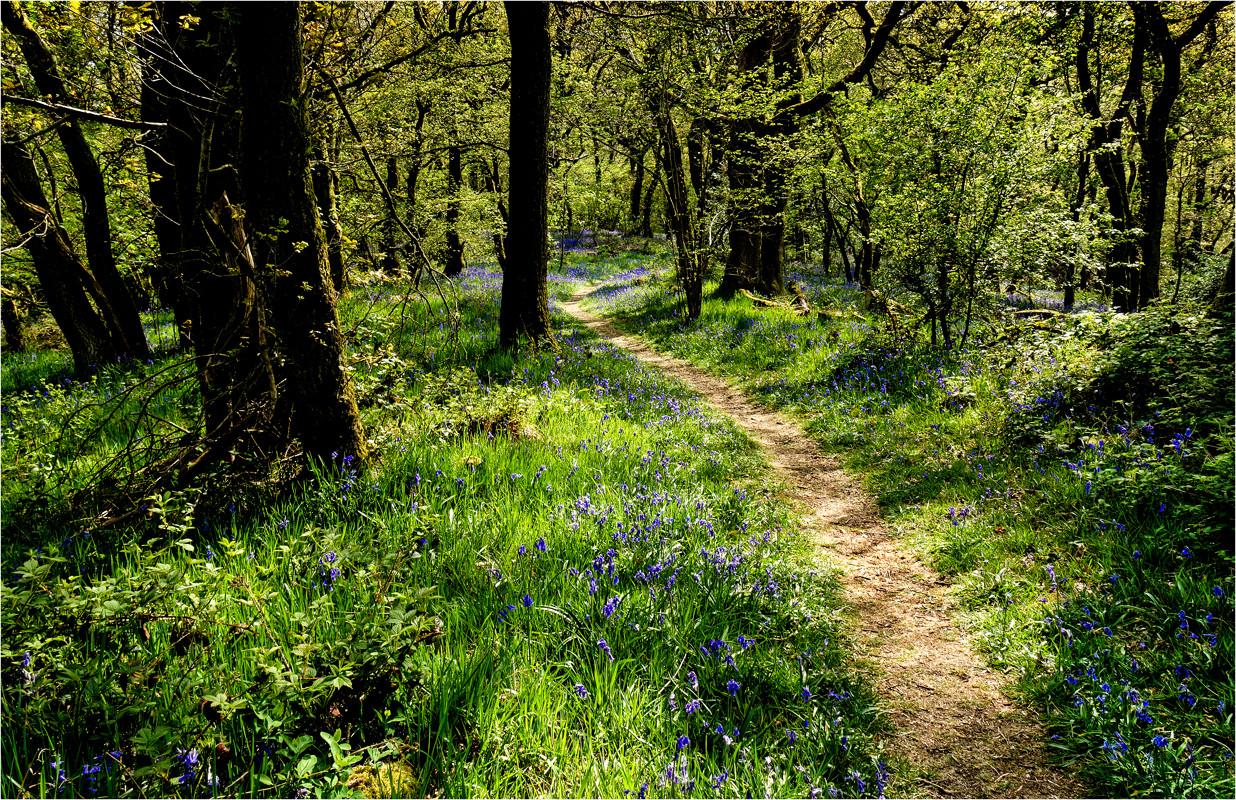 10 Bluebell Walk