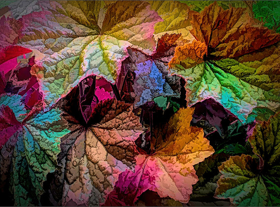 10 Leaf Colours.jpg