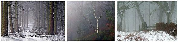 Misty Wood 3.jpg