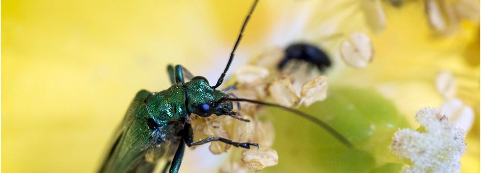 Emerald Invader