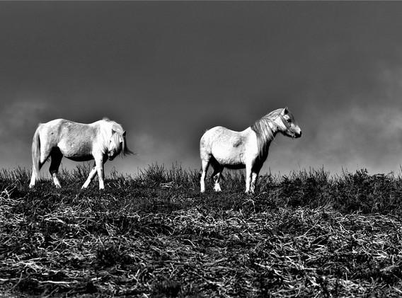 14 Ponies.JPG