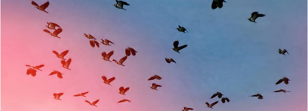 31 - The Birds.jpg