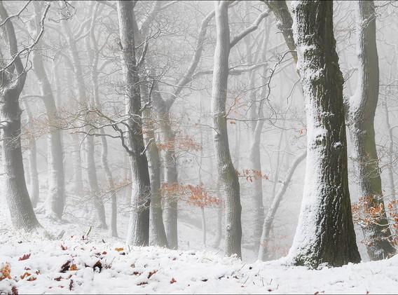 24 Winter woodland.jpg