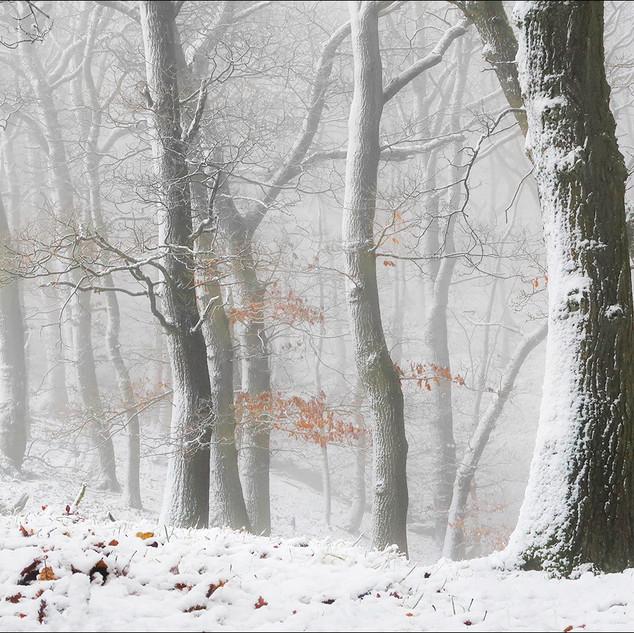 2nd Open: Winter Woodland