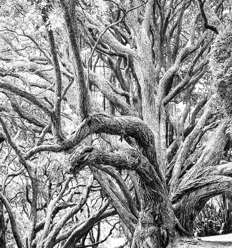 01 Two Tone Tree