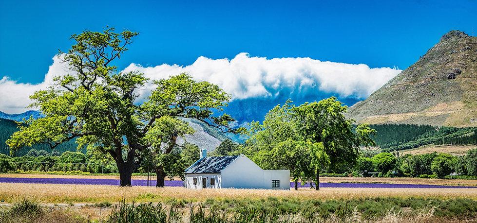 Franschhoek Lavendar Field by Simon Birkenhead