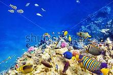 подводный мир.jpg