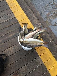 Destin Bay Fishin