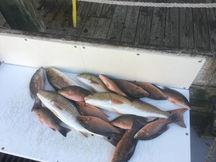 Bay Fishing Charter