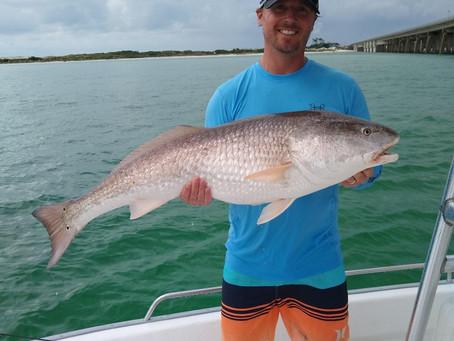 Big Bull Redfish