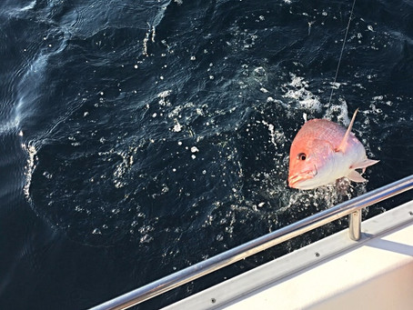 Here is another great picture from todays fishing charter.