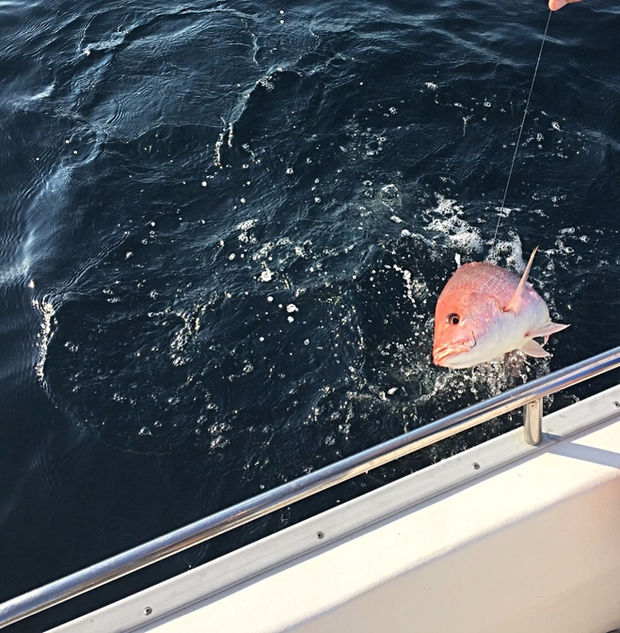 Red Snapper Fishing Charter Destin