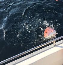 Red Snapper Fishing Charter Destin
