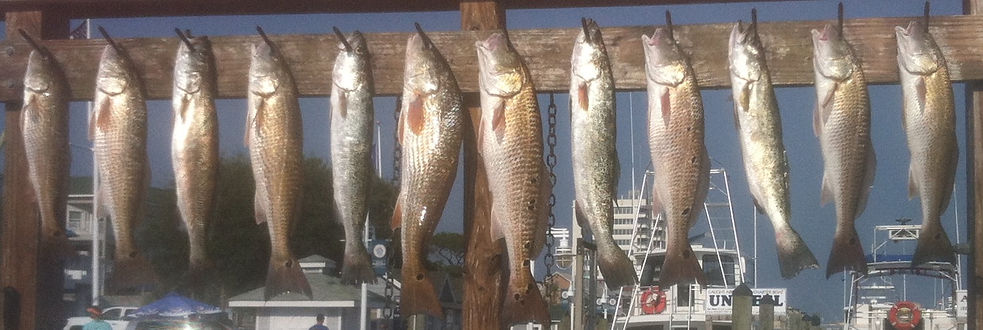 Great fishing trip out of Destin Fl