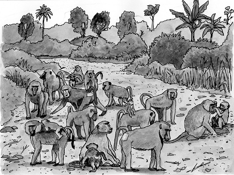 Baboons on the great-road