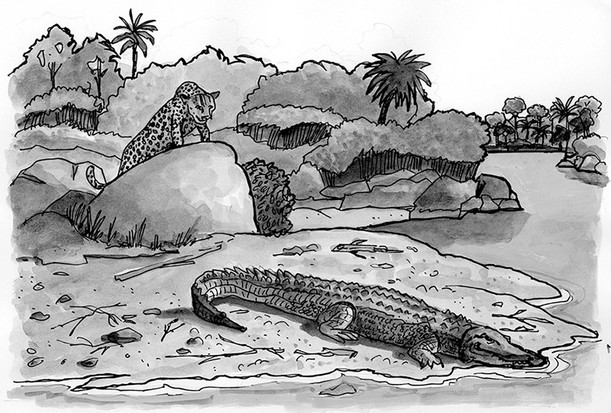Stalking a crocodile