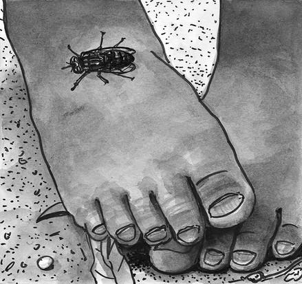 A tsetse fly bites.