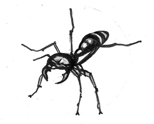 Driver ant